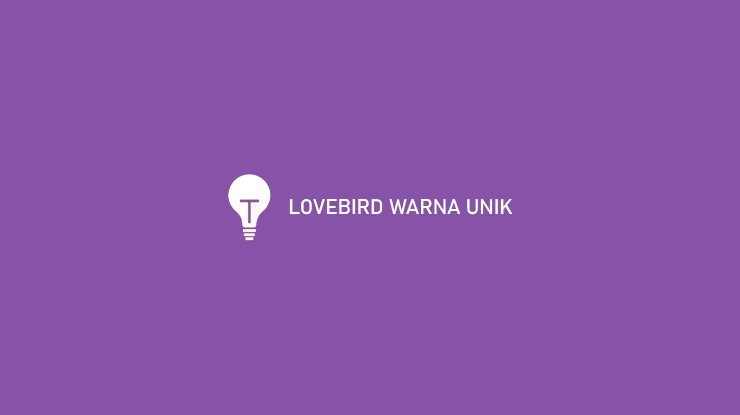 CARA MENCETAK LOVEBIRD WARNA UNIK