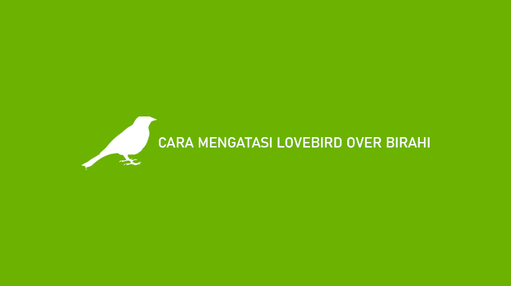 CARA MENGATASI LOVEBIRD OVER BIRAHI