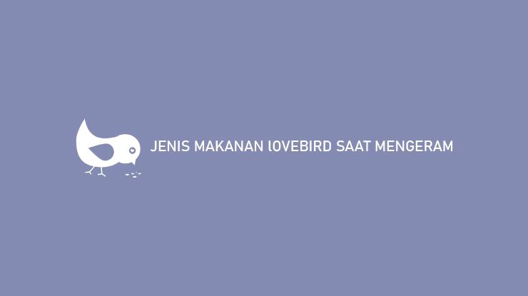 JENIS MAKANAN LOVEBIRD SAAT MENGERAM