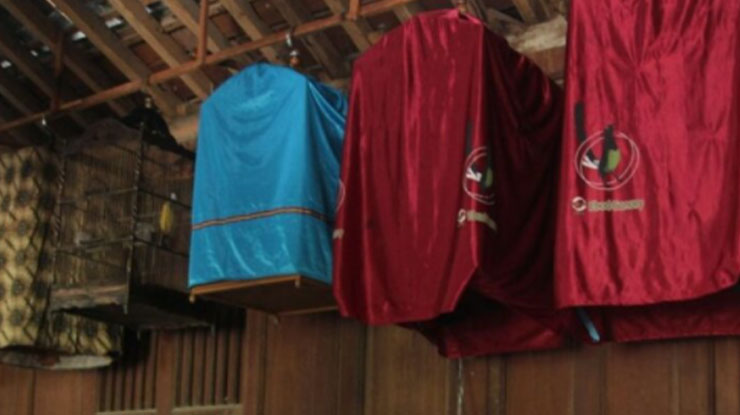 Pemasteran Rutin Untuk Membuat Kolibri Ninja Menjadi cepat Gacor