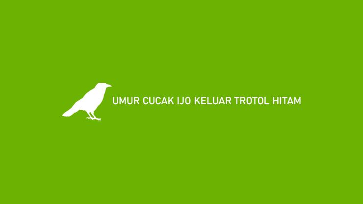 UMUR CUCAK IJO KELUAR TROTOL HITAM
