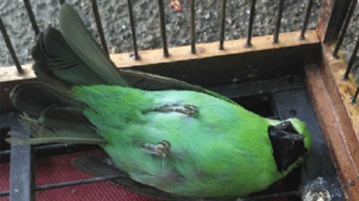 burung kaki lemas