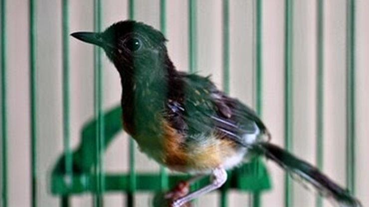 burung sakit kutu