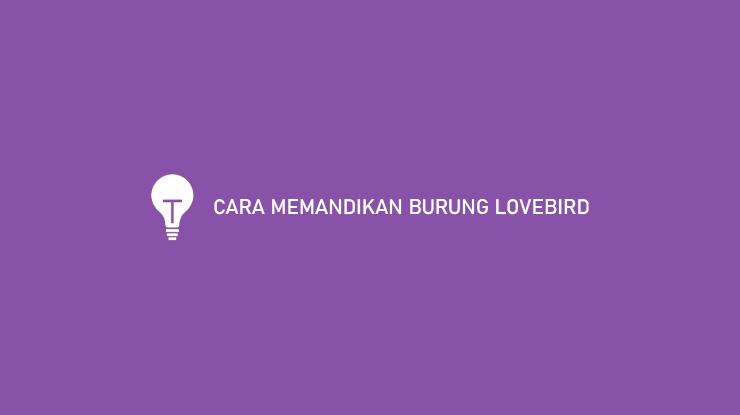 CARA MEMANDIKAN BURUNG LOVEBIRD