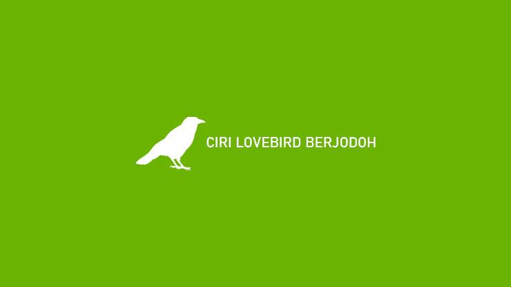 CIRI LOVEBIRD BERJODOH
