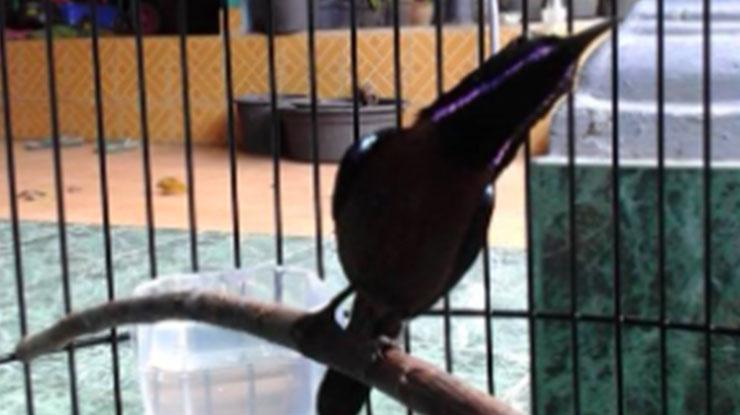 Cara Perawatan Burung Kolibri 1