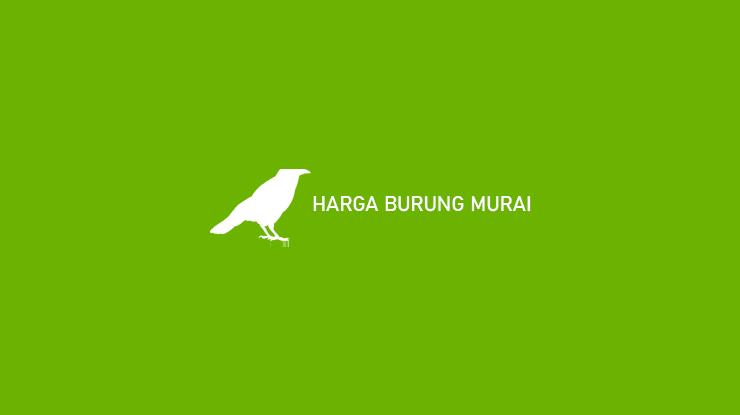 HARGA BURUNG MURAI