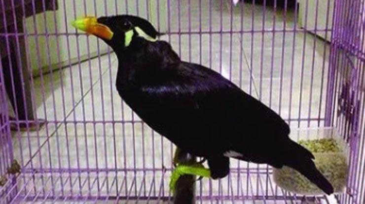 Harga Burung Beo Medan