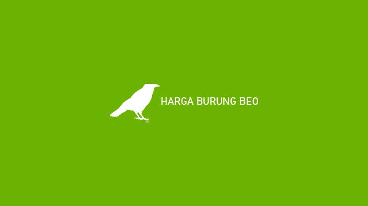 Harga Burung Beo