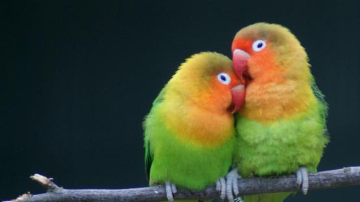 LOVEBIRD SEJODOH