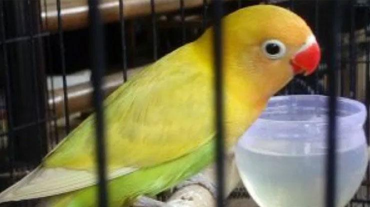 Pastel Kuning