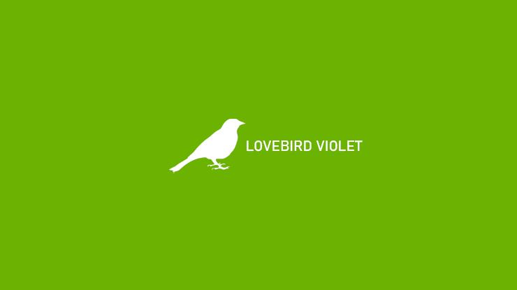 Lovebird Violet 1