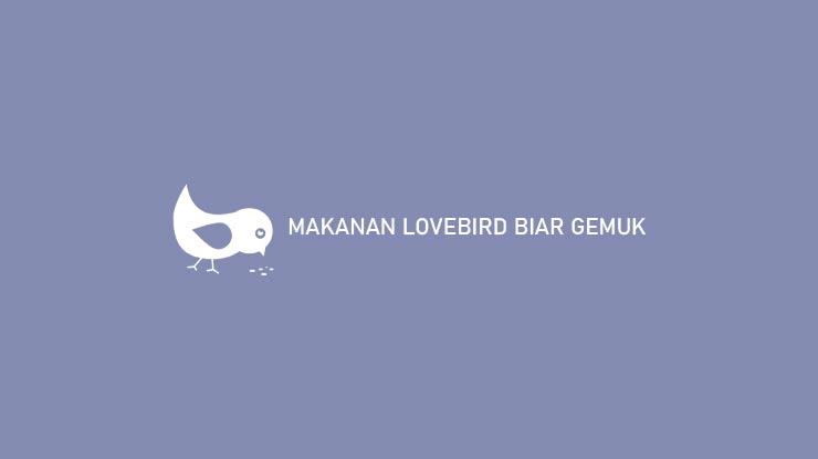 MAKANAN LOVEBIRD BIAR GEMUK