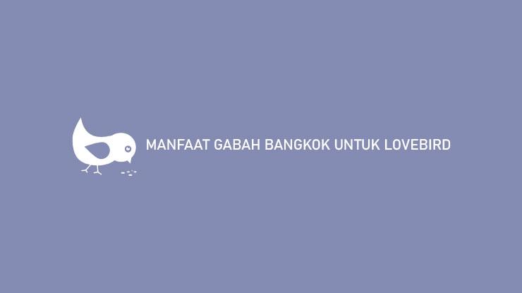 MANFAAT GABAH BANGKOK UNTUK LOVEBIRD