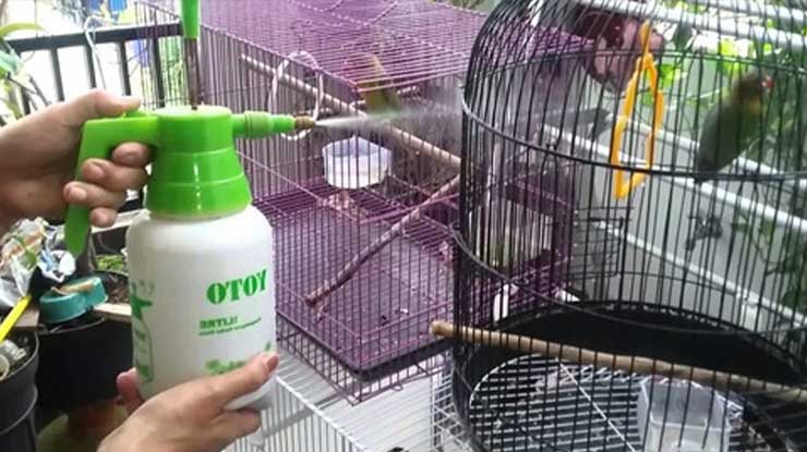 Gunakan Sprayer untuk Memandikan Lovebird