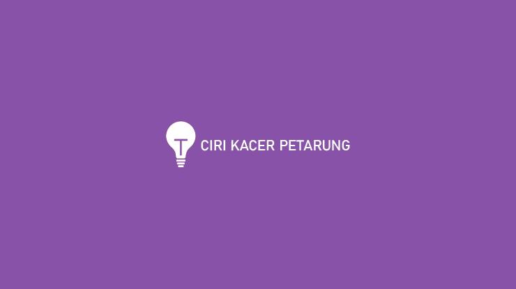 Ciri Kacer Petarung