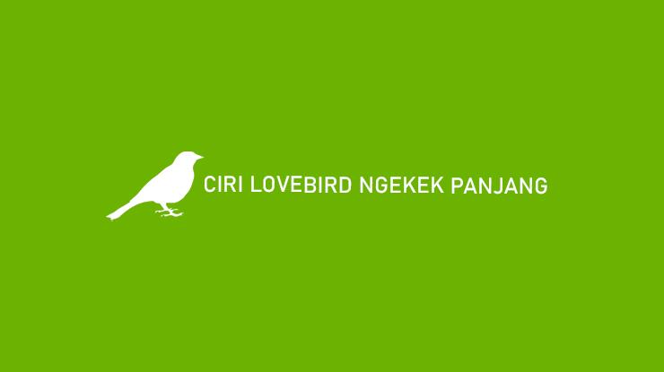 Ciri Lovebird Ngekek Panjang