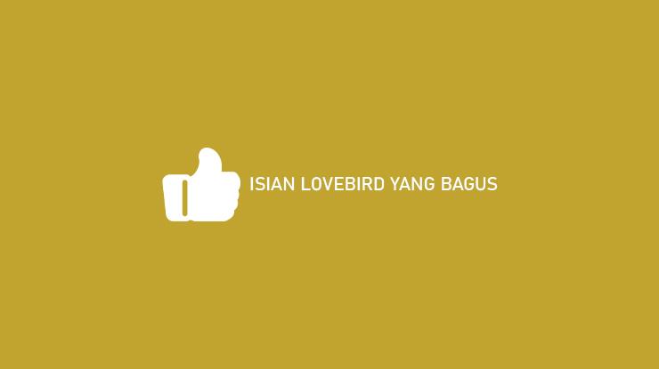 Isian Lovebird Yang Bagus
