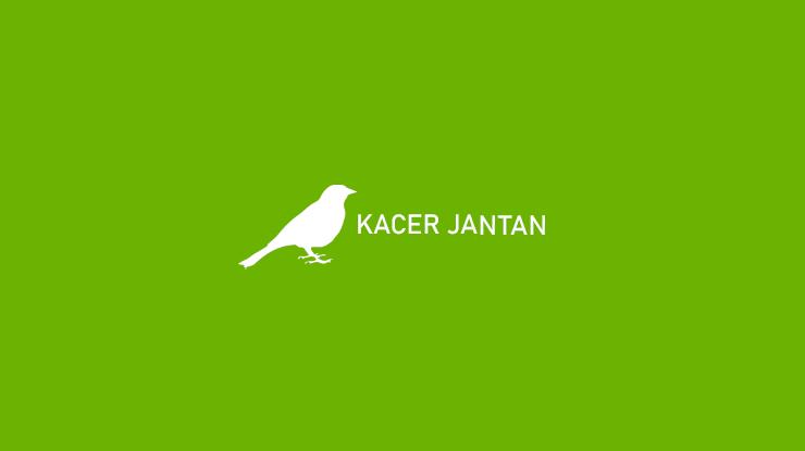 Kacer Jantan