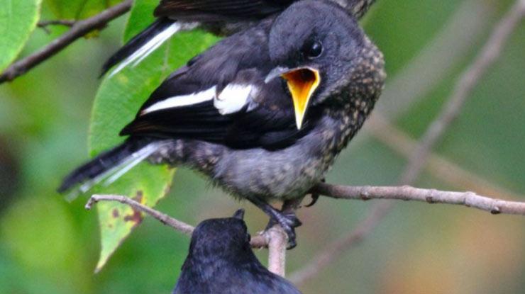 Tanda Burung Prospek