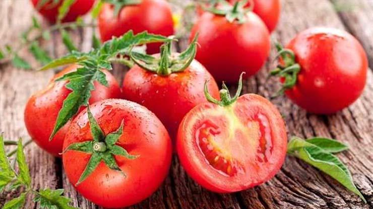 Pakan Lovebird Ternak Diantaranya adalah Tomat