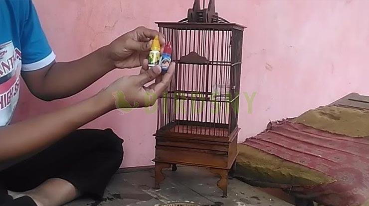 Multivitamin Burung Pleci