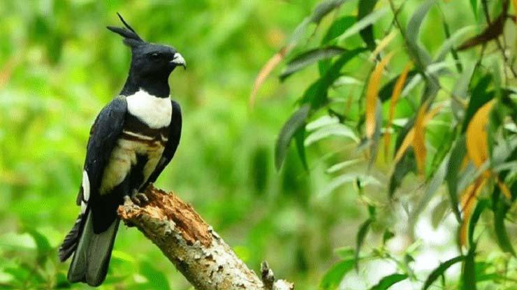 Baza Hitam Sumatera Utara