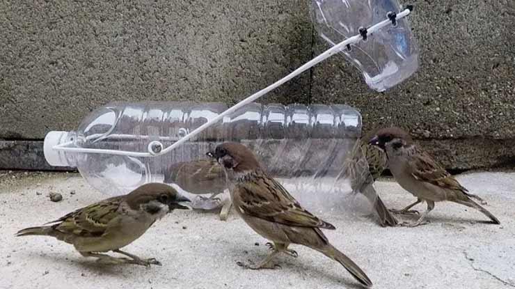 Cara Membuat Jebakan Burung Menggunakan Botol