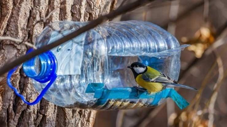 Cara Menangkap Burung Menggunakan Botol Bekas