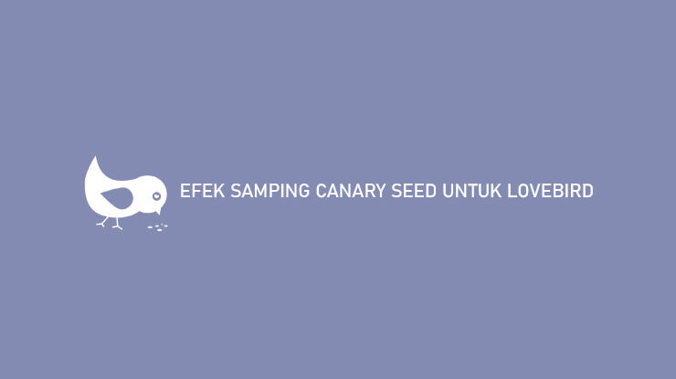 Efek Samping Canary Seed Untuk Lovebird