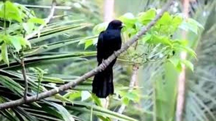 Habitat Asli Burung Tuwu