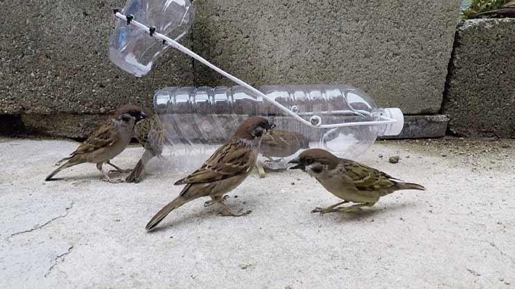 Jebakan Burung Terbaik Sederhana