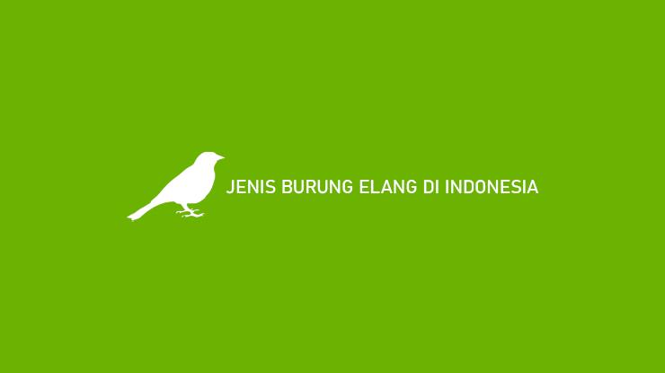 Jenis Burung Elang di Indonesia