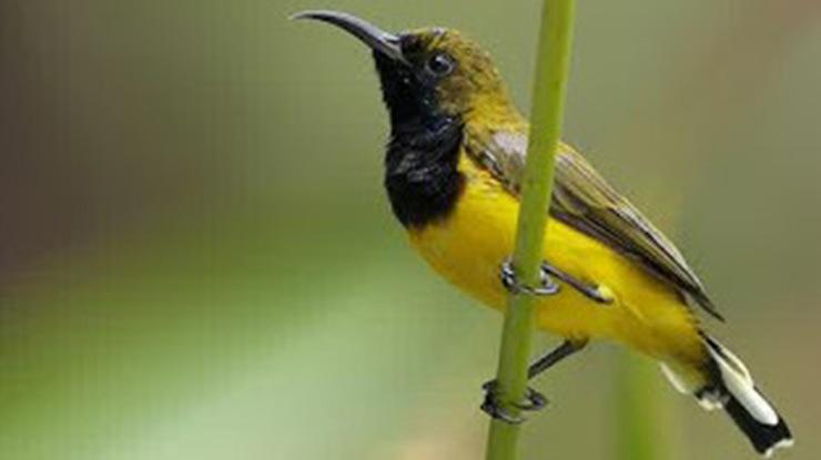Memenuhi Kebutuhan Nutrisi Burung