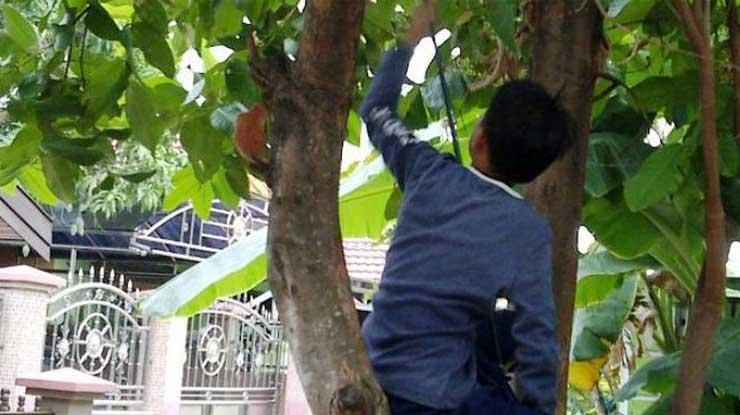 Mencari Pohon yang Tepat