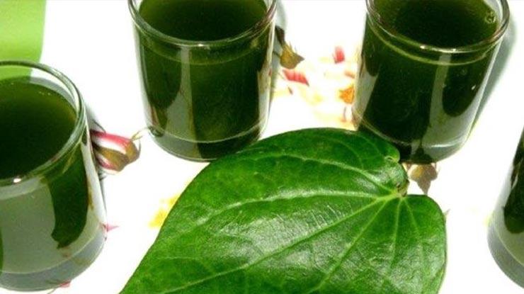 Obat Burung Serak dari daun Sirih