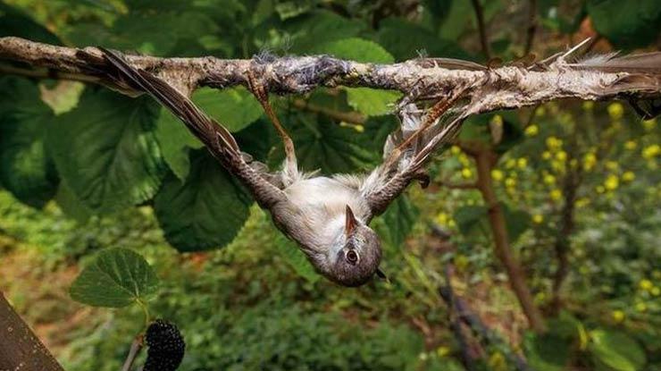 Tunggu Hingga Burung Terperangkap