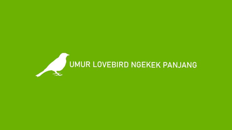 Umur Lovebird Ngekek Panjang