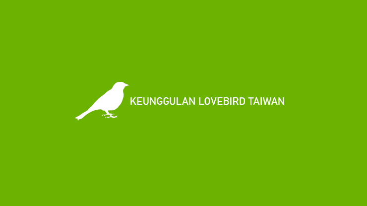 Keunggulan Lovebird Taiwan