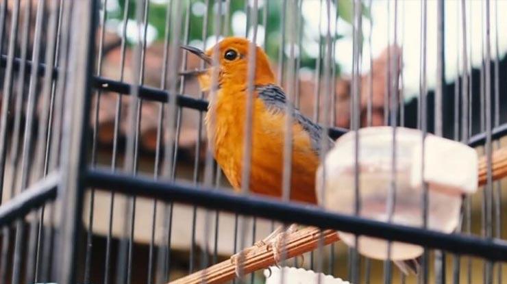 Penjemuran Terlalu Lama Menyebabkan Anis Merah Bunyi Crit