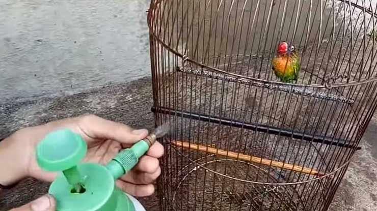 Perawatannya Lovebird Taiwan Lebih Mudah