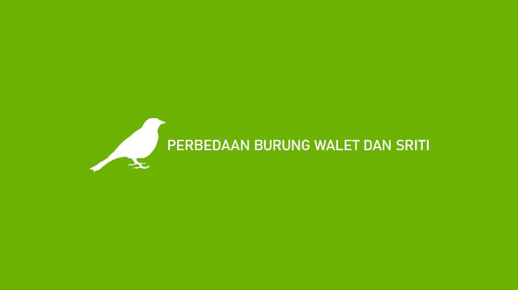Perbedaan Burung Walet dan Sriti