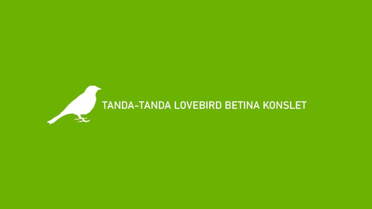 Tanda Tanda Lovebird Betina Konslet