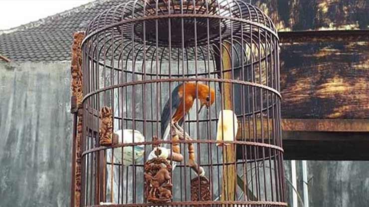 Tempatkan Burung di Ruang yang Nyaman